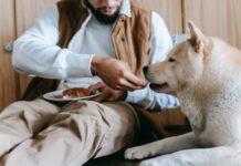 Karmienie psa z alergiami pokarmowymi